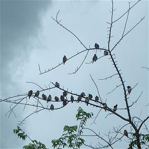 birdfest.jpg