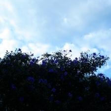 color-purple2.jpg