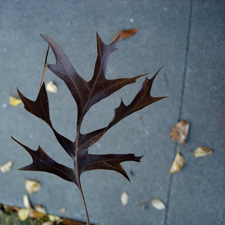brown-leaf2.jpg