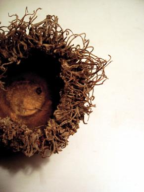 little-nest.jpg