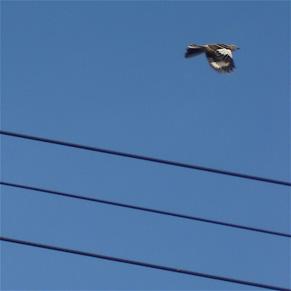 wing-flash.jpg