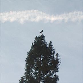 and-a-black-crow.jpg